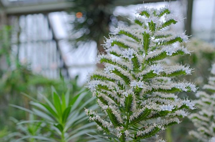 Kew 13