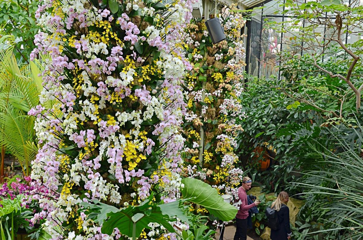 Photos | Kew Gardens 2018 Orchid Festival