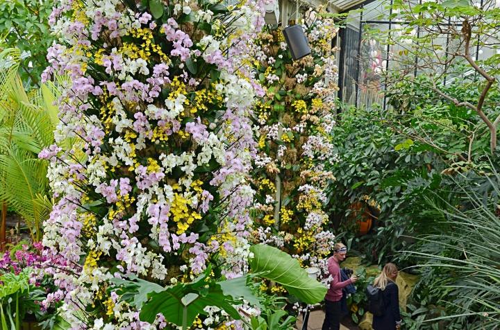 Photos | Kew Gardens 2018 OrchidFestival